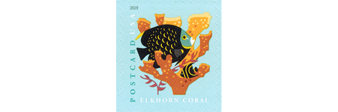 Coral Reef Post Card rate